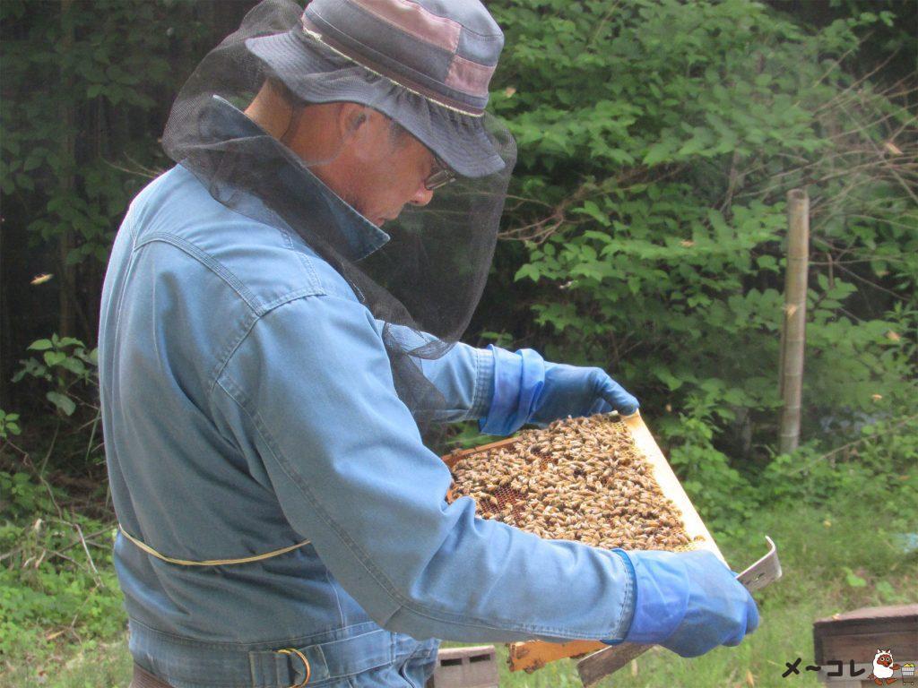 舘養蜂場本店
