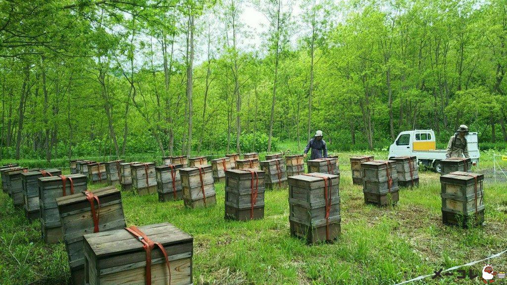 舘養蜂場本店の養蜂場